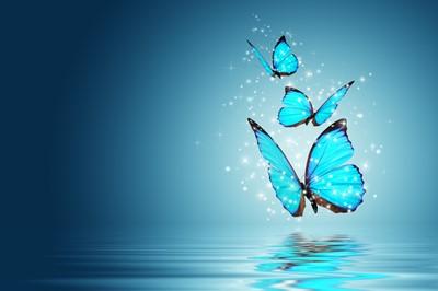 蝶のシンボル 変容